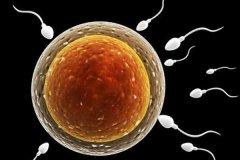 精子活力低吃什么药