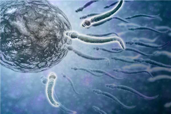 影响精子质量的因素有哪些?十大因素详细分析