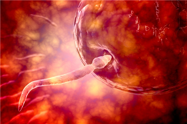 精子少的原因有哪些?如何增加精子数量?