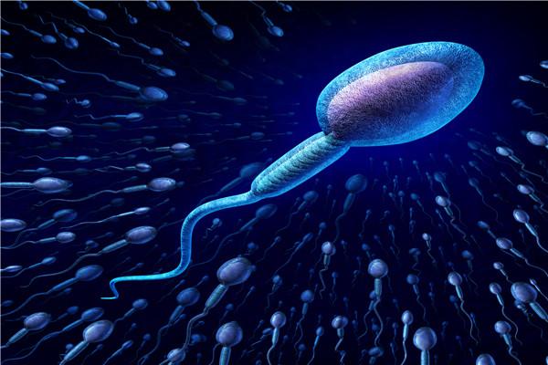 精子为什么畸形?如何才能避免?